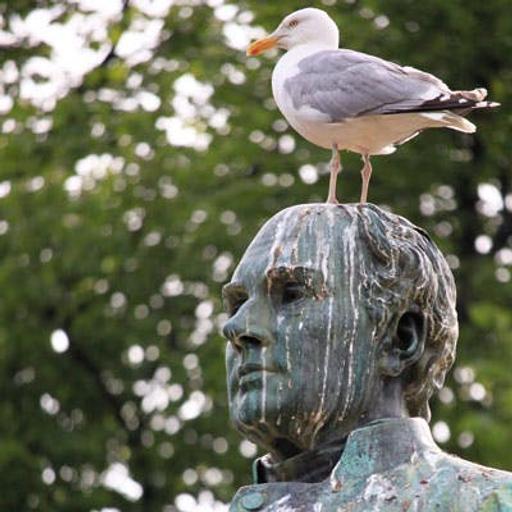 455 - Gli uccelli cacano bianco