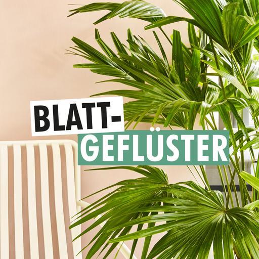 Blattgeflüster - Der Zimmerpflanzenpodcast von SCHÖNER WOHNEN, COUCH und Pflanzenfreude.de
